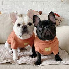 Cosy Sweater Hoodies Coat Jacket for French Bulldog Medium Dogs Cãezinhos Bulldog, French Bulldog Puppies, French Bulldogs, Frenchie Puppies, German Shepherd Breeds, German Shepherds, Popular Dog Breeds, Dog Jacket, Medium Dogs