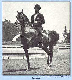 Hanad  AHR #489  Color: Chestnut Sex: Stallion Foaled: May 29, 1922  Sire: *Deyr (Desert Bred x Desert Bred)  Dam: Sankirah (*Hamrah x Moliah by *Hamrah)  Breeder: Peter Bradley. Hingham Stock Farm. Hingham, Massachusetts