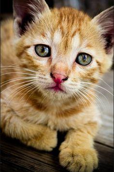 Kitty(: