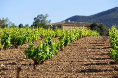 Ruta del vino de Bullas | Vineyard, Plants, Outdoor, Lodges, Wine Cellars, Paths, Museums, Fotografia, Outdoors