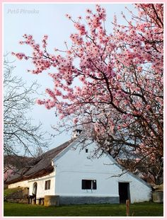 Great Plains, Pink Blossom, My Town, Homeland, Hungary, Budapest, Farmhouse, Culture, Landscape