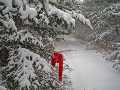 A Bit of Red, Cumberland, Maine (2). Photo by Stephen A. Smith