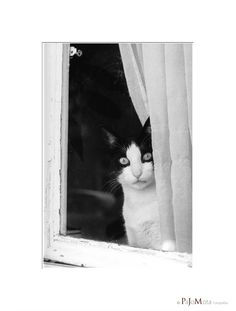 Curious Cat...