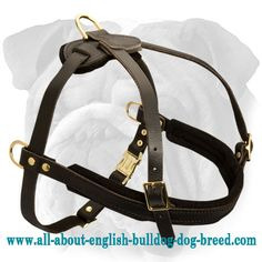 Stylish Tracking #Leather #Dog #Harness for #English #Bulldog $45.00   www.all-about-english-bulldog-dog-breed.com