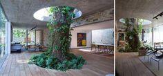 Arquitectos con mucho amor por los árboles