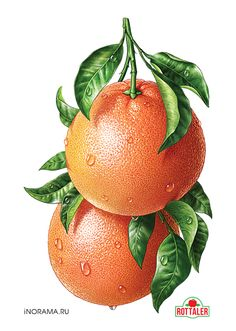 "Grapefruit. Illustration for the line of juices ROTTALER (OOO ""Neva cheese""). http://www.nevcheeses.com"