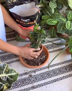 Repotting the ZZ Plant succulent Repotting the ZZ Plant succulent Succulent City succulentcity Succulent Videos For how-to s tips and tricks and inspiration on all things nbsp hellip pflanzen videos Succulent Gardening, Planting Succulents, Garden Plants, Planting Flowers, Succulent Care, House Plants Decor, Plant Decor, Indoor Water Garden, Zz Plant