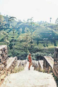 Tea plantations in Nuwara Eliya I Sri Lanka: http://www.ohhcouture.com/2017/02/sri-lanka-travelguide/ #ohhcouture #leoniehanne