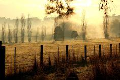 I'm on a foggy highway | by karen_tregoning