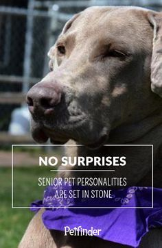 Another great reason to consider adopting a senior pet: their personalities are already developed, so you'll know immediately if he or she is a good fit for your family. #PetfinderSenior