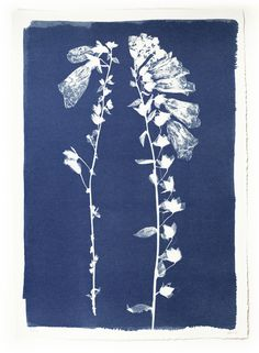 Foxgloves Cyanotype by Henrietta Molinaro at Wilson Stephens & Jones http://www.wilsonstephensandjones.com
