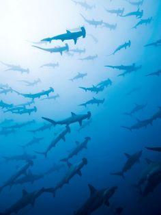 Es el Cocos Island de Costa Rica. Esta en la oceano de Costa Rica. Se puede nadar con tiburones.