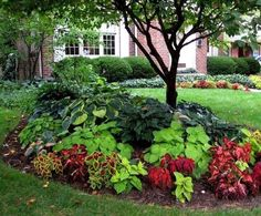 Shade garden beds with red/burgundy from Coleus green from Hosta Potato Vine. Gonna try it around my big oak tree in the front yard! Though I might add some caladiums and impatiens as well! Landscaping Around Trees, Small Front Yard Landscaping, Front Yard Design, Backyard Landscaping, Landscaping Ideas, Farmhouse Landscaping, Inexpensive Landscaping, Natural Landscaping, Shady Backyard Ideas