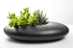 Collage With Nature — River Rock Ikabana Planter Kit Black large Succulents