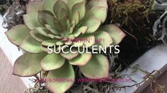 Nice video tutorial on inking the Succulents (Stampin Up)