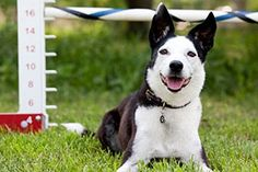 Training Your New Dog - scroll down for a list of specific training instructions