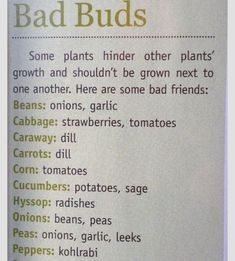 Urban Farm Mag - not companion plants. There is also a Companion Planting Guide . - Urban Farm Mag – not companion plants. There is also a Companion Planting Guide on this site. Hydroponic Gardening, Hydroponics, Organic Gardening, Container Gardening, Gardening Tips, Aquaponics System, Urban Gardening, Gardening Supplies, Kitchen Gardening