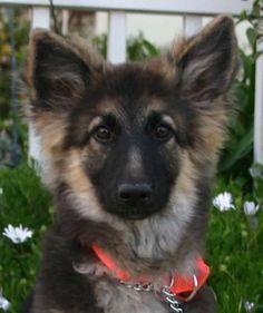 Good Cuby Chubby Adorable Dog - 289a8f6ab9123ac57a49b72b031a4545--image-animals  Collection_131513  .jpg