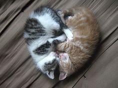 two sleeping kitties form a heart
