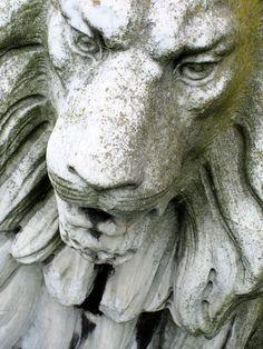 ...stone lion..