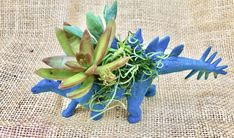 Excited to share this item from my shop: Dinosaur Succulent Planter Pal Cool Succulents, Succulents In Containers, Birthday Bag, Birthday Cards, All Dinosaurs, Succulent Gifts, Reduce Reuse Recycle, Succulent Arrangements, Something New