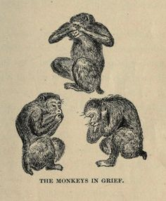 """nemfrog - """"The monkeys in grief.""""The Fire-fly's lovers, and..."""