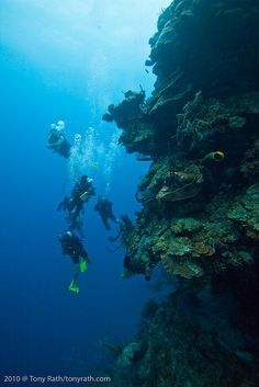#Scuba #Diving - SCUBA diving Lighthouse Reef