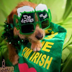 St. Patrick's Pup!