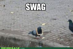 Cannot. Stop. Laughing. Swageon? Remind you of anything? Stop and do the pigeon. :)