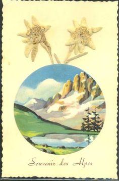 GM077-VRAIE-FLEUR-Sechee-REAL-FLOWER-EDELWEISS-SOUVENIR-des-ALPES