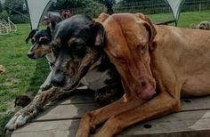 Day care Dog Days, Dogs, Animals, Animales, Animaux, Pet Dogs, Doggies, Animal, Animais