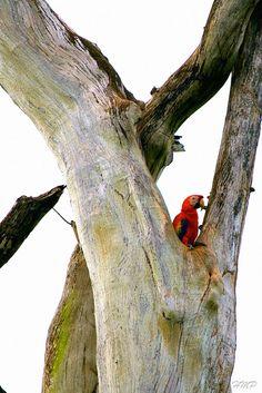 Through POWERSful Lenses . . . .: Carara National Park, Costa Rica