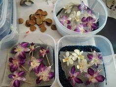 Webklik.nl - resin-coating-orchids