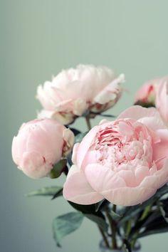Peony tips This is a solid article. In my experience, I agree with the writer.