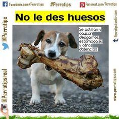 Hay quienes insisten en dar huesos cocidos a sus perros. Le restas calidad de vida #perrotips