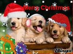 christmas dogs cats gifs - Google Search