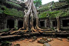 Les ruines d'Angkor Wat – Cambodge - C'est le temple le mieux conservé d'Angkor mais également une des plus grandes villes médiévales du monde. La nature y a repris ses droits depuis bien longtemps, laissant derrière elle des architectures entières faites de racines et de troncs.