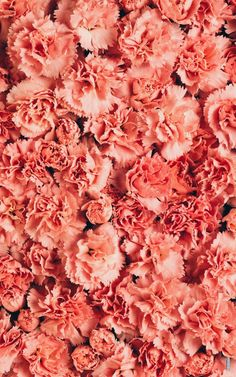 Coral Carnations Art Print by mathiuswilder Peach Colors, Coral Color, Coral Pink, Colours, Peach Aesthetic, Live Coral, Nature Wallpaper, Color Of The Year, Pantone Color