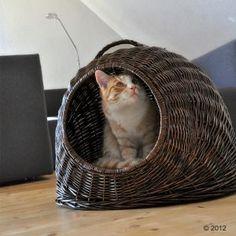 Panier de transport XXL - Cage de transport pour chien et chat - zooplus