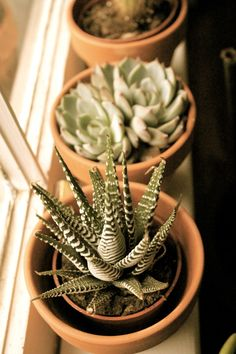Give me all the Succulents for my nonexistent dream house please. Succulent Rock Garden, Succulent Gardening, Succulent Pots, Cacti And Succulents, Indoor Gardening, Cactus, How To Make Terrariums, Desert Flowers, Modern Landscaping
