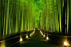 Ein Paradies für Pandas: Der Sagano-Bambuswald in Kyoto ist so hoch und so dicht, dass man vor lauter Bambusstängeln kaum noch den Himmel sieht. http://www.spiegel.de/fotostrecke/die-aussergewoehnlichsten-landschaften-auf-der-erde-fotostrecke-117084-8.html