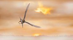 Ala doğan - Red footed Falcon - Falco vespertinus by aatac