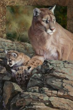 Mountain Lion painting by Val Warner Wildlife Paintings, Wildlife Art, Animal Paintings, Animal Drawings, Small Wild Cats, Big Cats, Cat Drawing, Drawing People, Beautiful Cats
