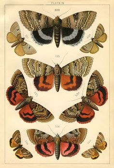 Free printables here - Natural History Print - Moths - The Graphics Fairy