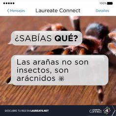 ¿Te dan miedo las arañas! #DatoInteresante #Laureate