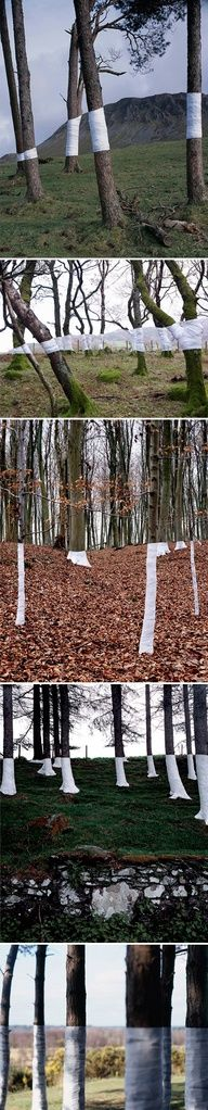Trees, wrapped in white and perfectly aligned with the horizon hence the title of this beautiful work by Zander Olsen, Tree Line.