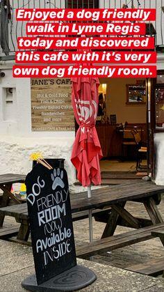 Dog Friendly Holidays, Lyme Regis, Jurassic Coast, Holiday Park, Cold Meals, Dog Walking, Dog Friends, Beaches, Woodland