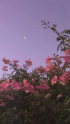 Android Wallpaper – Flower under night sky - Wallpaper - Bilder Tumblr Wallpaper, Android Wallpaper Flowers, Wallpaper Pastel, Night Sky Wallpaper, Iphone Background Wallpaper, Aesthetic Pastel Wallpaper, Aesthetic Backgrounds, Flower Wallpaper, Nature Wallpaper