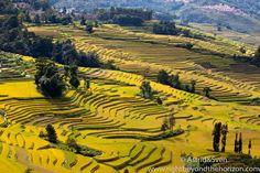 Rice terraces of Yuanyang #riceterraces #yuanyang #travel