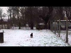 Airedale Terrier von Erikson beim Spielen mit dem großen Spielei - http://www.baubaunews.com/bau-blog/airedale-terrier-von-erikson-beim-spielen-mit-dem-grosen-spielei/ http://img.youtube.com/vi/141BP3GlYo8/0.jpg